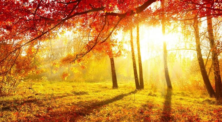 FreeGreatPicture.com-53921-golden-autumn