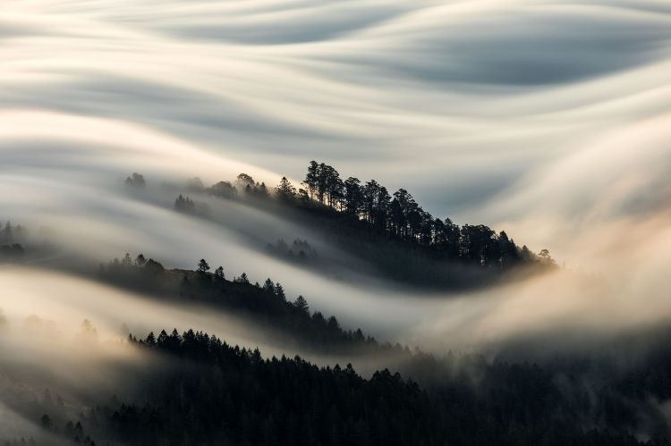 Blanket of Fog, Mill Valley, California